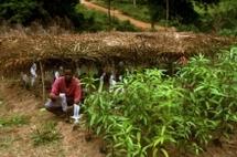 L'Afrique exporte ses produits bio