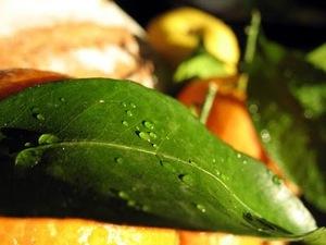 Systèmes de gestion de la qualité en vigueur dans l'industrie alimentaire