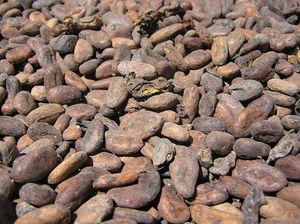 Le chocolat : un produit de luxe en devenir ?