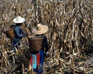 Droits fonciers : un succès en demi-teinte pour la FAO