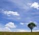 """Coordonner les filières dites """"naturelles"""": un défi économique, un enjeu de santé publique"""