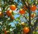 https://www.carnetsdubusiness.com/Mains-d-oeuvre-agricole-l-appel-a-l-aide-du-departement-des-Bouches-du-Rhone_a2367.html
